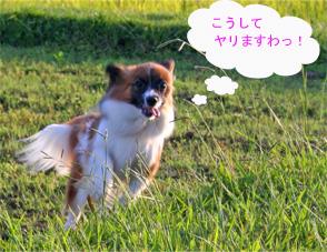 yuzu061007-8.jpg
