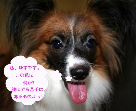 yuzu061009-1.jpg