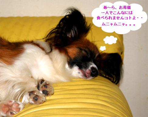yuzu061011-1.jpg