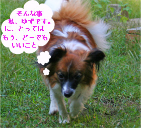 yuzu061012-2.jpg