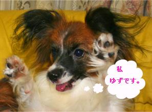 yuzu061013-3.jpg