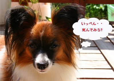 yuzu061013-4.jpg