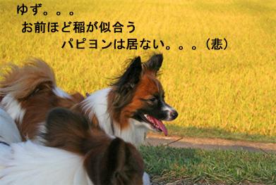 yuzu061015-2.jpg