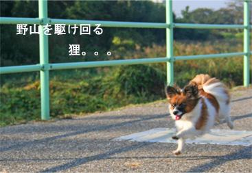 yuzu061015-3.jpg