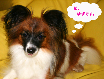 yuzu061016-1.jpg