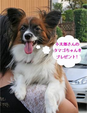 yuzu061016-2.jpg