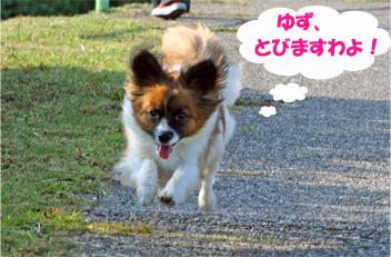 yuzu061019-5.jpg