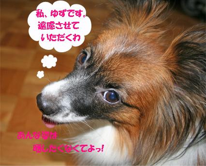 yuzu061020-1.jpg