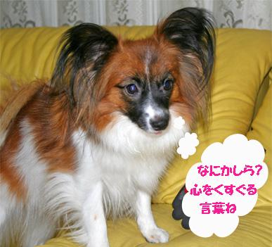 yuzu061020-2.jpg