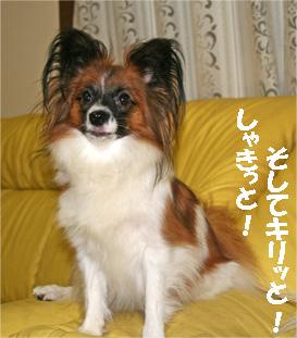 yuzu061020-3.jpg