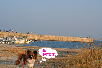 yuzu061022-1.jpg