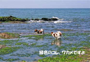 yuzu061022-17.jpg