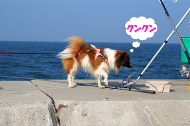 yuzu061022-4.jpg