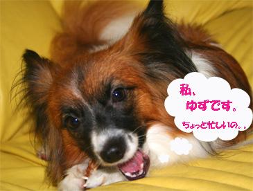 yuzu061025-1.jpg