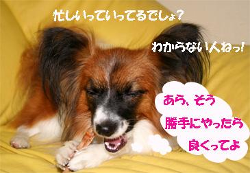 yuzu061025-2.jpg