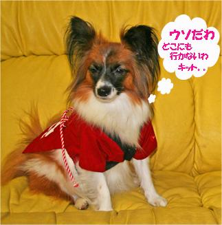 yuzu061025-4.jpg