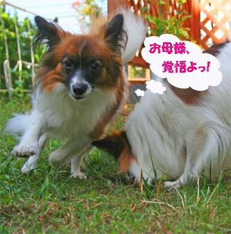 yuzu061027-1.jpg