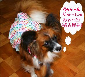 yuzu061031-5.jpg