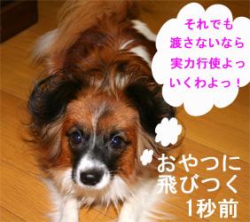 yuzu061101-3.jpg
