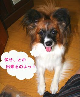 yuzu061101-4.jpg