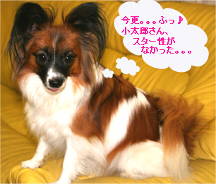 yuzu061102-2.jpg
