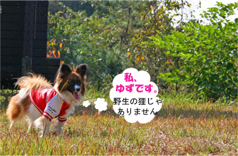 yuzu061105-1.jpg