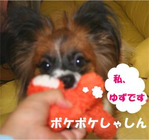 yuzu061106-1.jpg