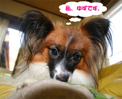 yuzu061108-1.jpg
