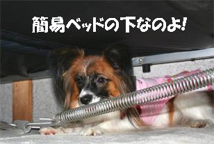yuzu061108-2.jpg