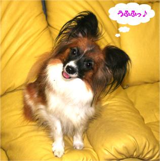 yuzu061108-3.jpg