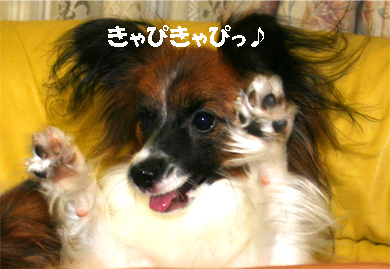 yuzu061109-1.jpg