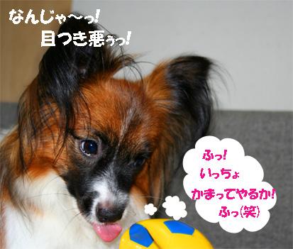 yuzu061109-2.jpg