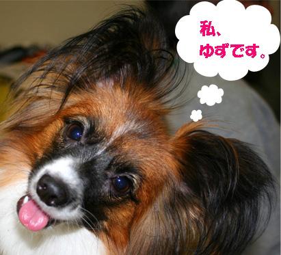 yuzu061110-1_20080731110118.jpg