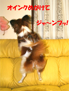 yuzu061110-3.jpg