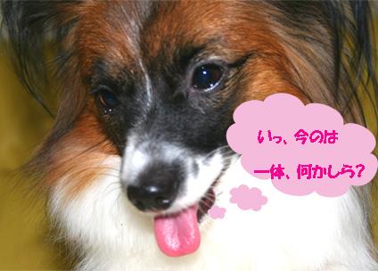 yuzu061110-5.jpg