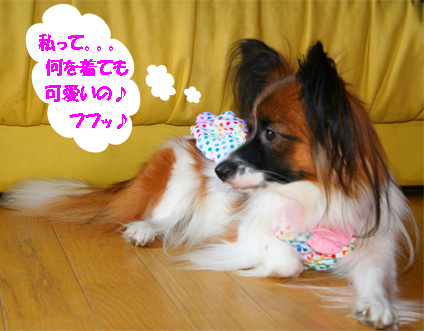 yuzu061113-10.jpg