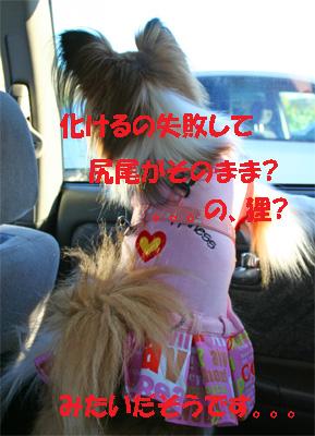 yuzu061113-11.jpg