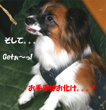 yuzu061113-13.jpg