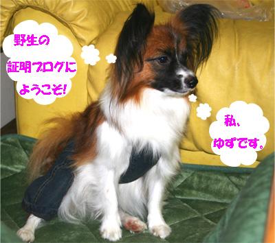 yuzu061113-15.jpg