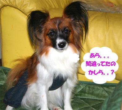 yuzu061113-16.jpg