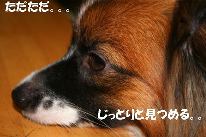yuzu061113-17.jpg