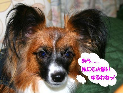 yuzu061114-1.jpg