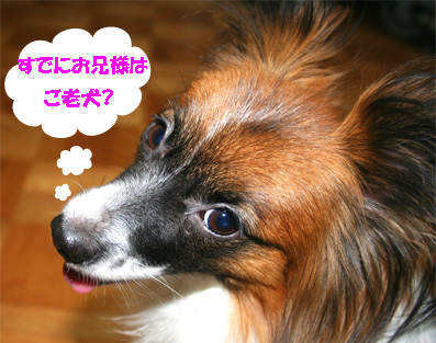 yuzu061116-3.jpg