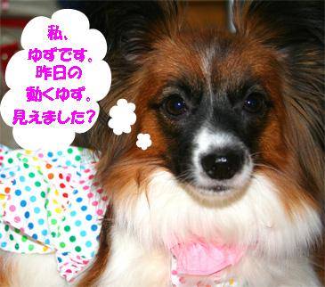 yuzu061117-1.jpg