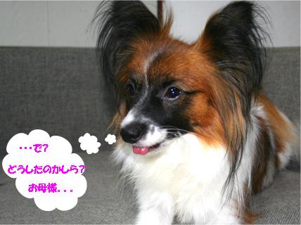 yuzu061117-2.jpg