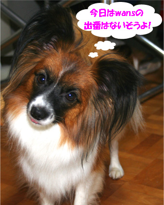 yuzu061118-2.jpg