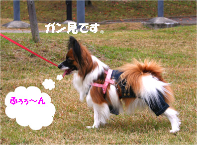 yuzu061120-5.jpg