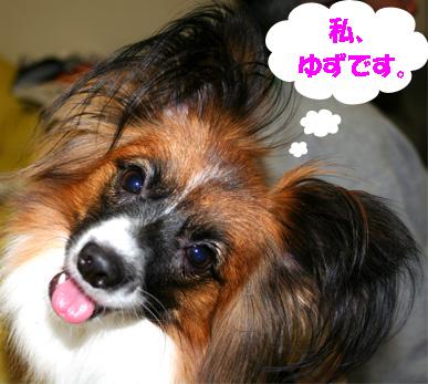 yuzu061121-1.jpg