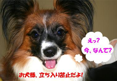 yuzu061121-3.jpg