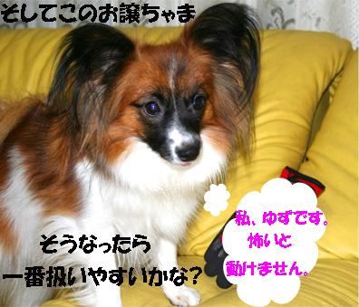 yuzu061121-4.jpg